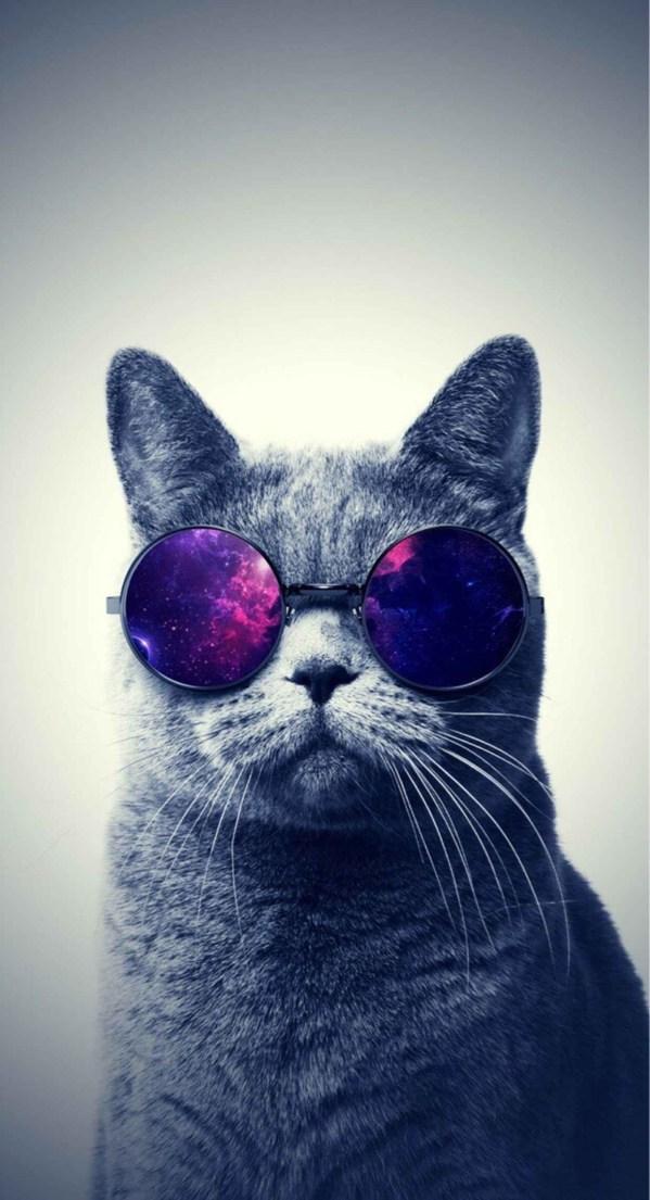 Скачать бесплатно картинки котят на телефон - лучшие заставки