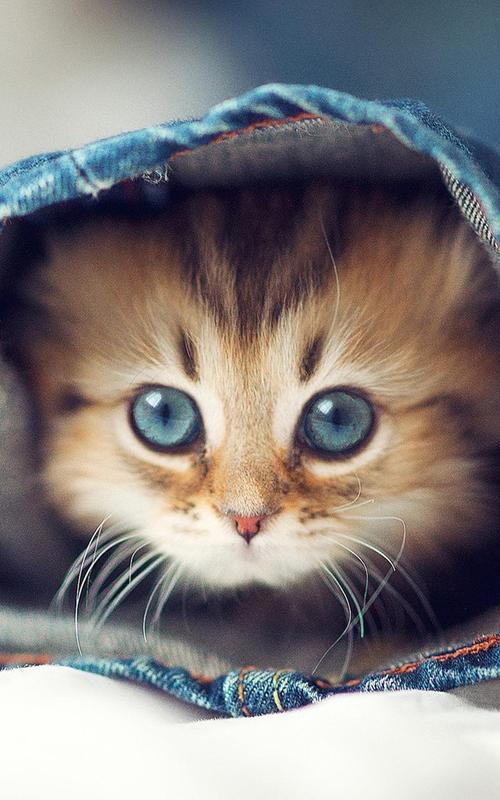 Скачать бесплатно картинки на телефон с котятами ...