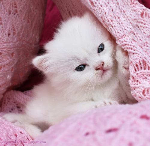Фото няшные котики рисунки - подборка