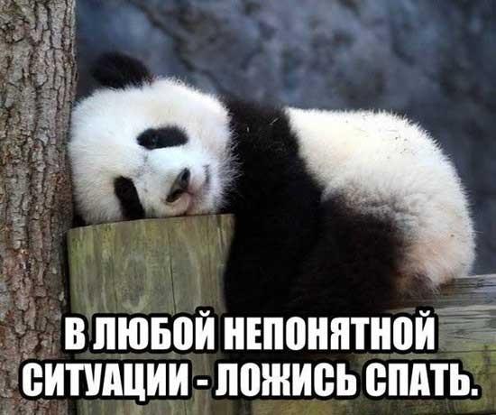 Я спать картинки смешные и веселые