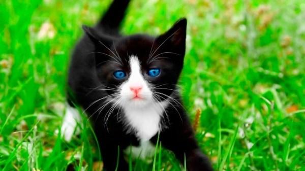 Картинки милых животных скачать - красивая подборка