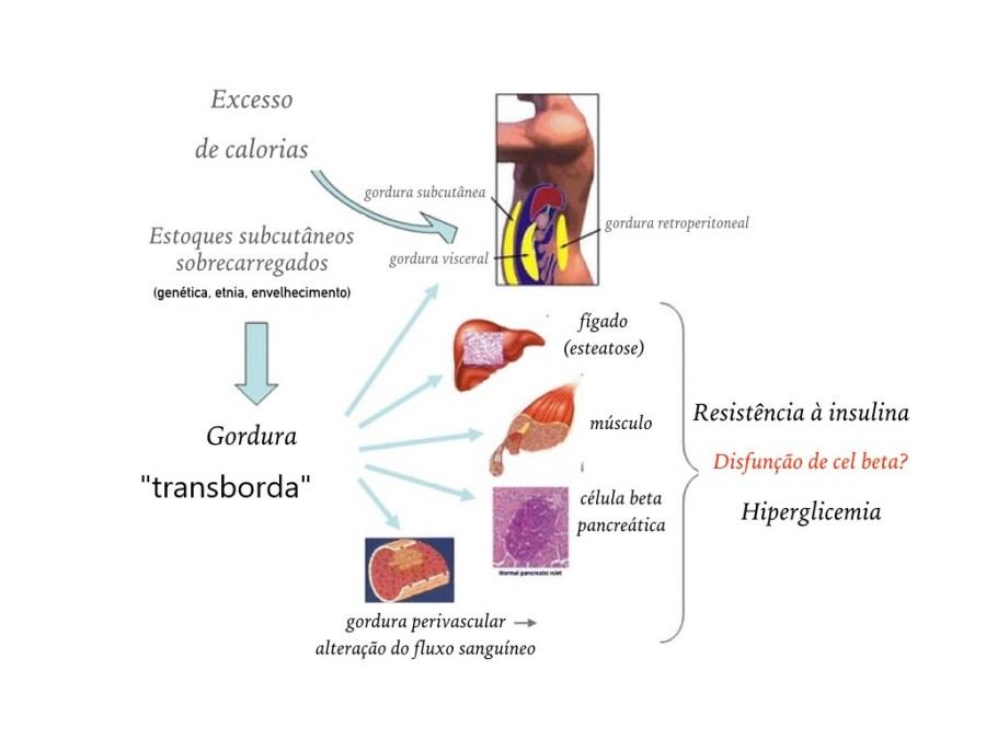 dieta de diabetes lipotoxicidade