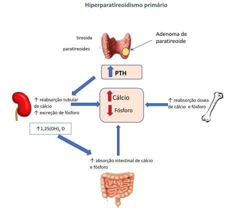 Efeitos do aumento do PTH nos diversos órgãos-alvo