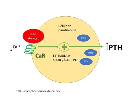 Não ativação do receptor sensor de cálcio na hipocalcemia e redução da secreção do PTH