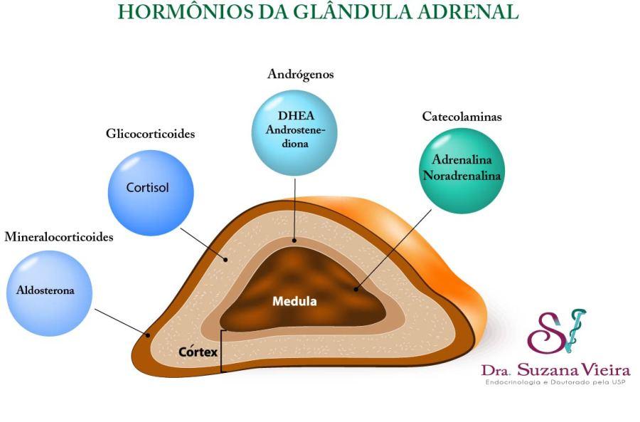 Hormônios produzidos pela glândula adrenal