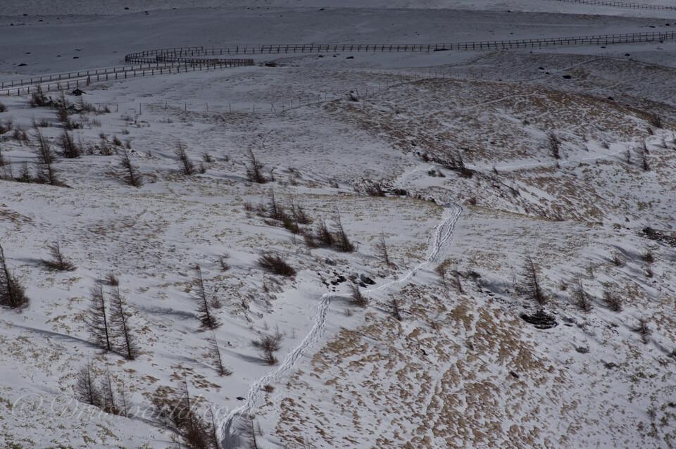 DFA100mmで遠景撮影。カリカリの解像感。