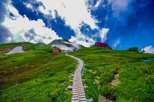 北アルプスでナンバーワンのお花畑を堪能するなら7月の朝日岳がオススメ
