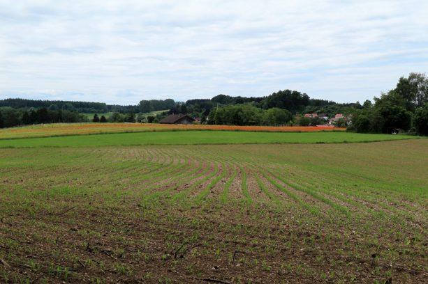 Mohnfeld bei Dorfen