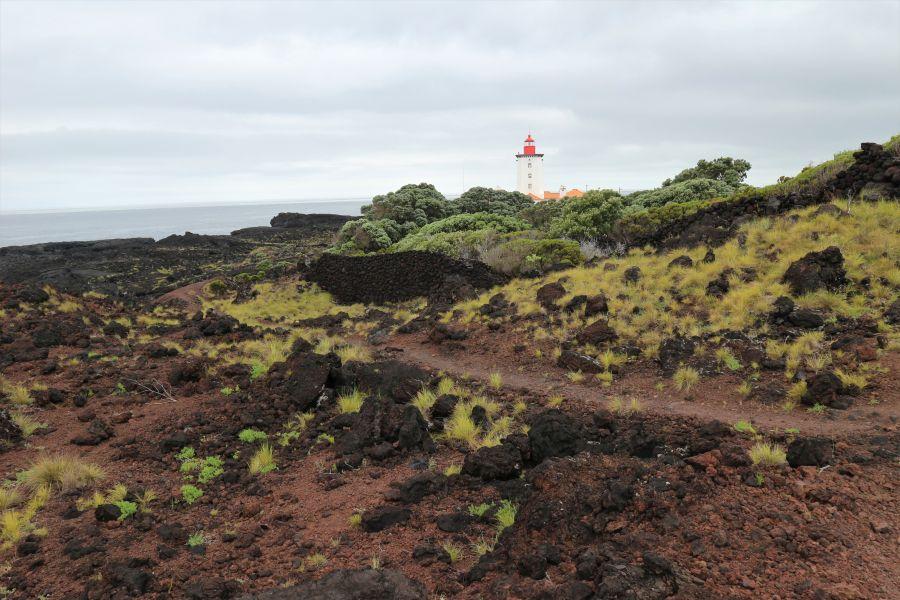 Ponta da Ilha Pico (5)