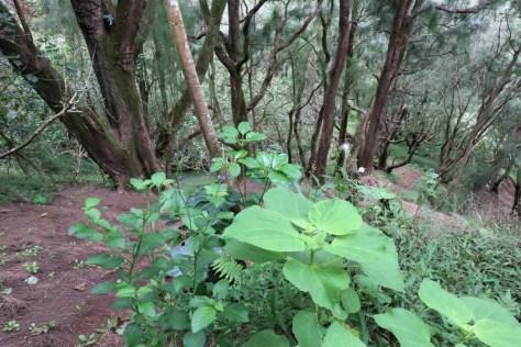 Der Anfang des Weges im Wald