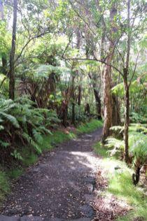 Kilauea Iki Trail Hawaii (2)