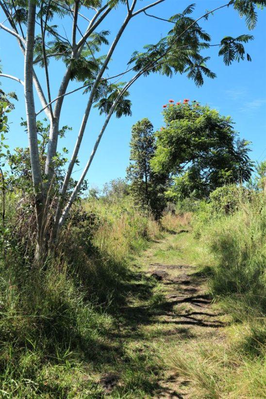 Nania Trail Hawaii (1)
