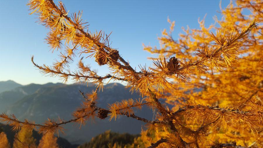 Ein Hüttenwochenende im Trentino – Die Baita Monte Cauriol
