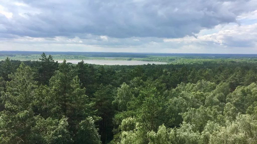 Blick vom Käflingsberg über den Müritz Nationalpark