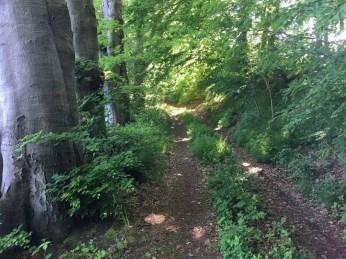 Der unwegsame Uferweg bei Niendorf