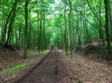 Radweg im Naturschutzgebiet Hevenbruch