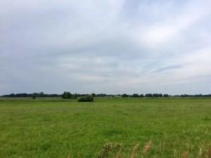 Sommerwiese und Liepe im Hintergrund