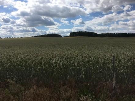 Am Feld zwischen Rathenow und Rhinow