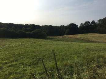 Sommerliche Landschaft bei Lütjensee