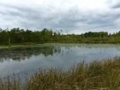 Sumpf, Wasser und Morast prägen die Landschaft