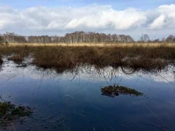 Wandern in Hamburg: Sumpf im Duvenstedter Brook