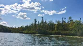 Uferwald am Leppiner See (Mecklenburger Seenplatte in MV)