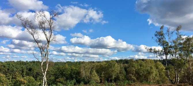 Wandern in Hamburgs Süden: Durch die Fischbeker Heide
