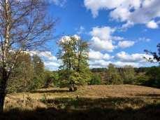 Wandern in Hamburgs Süden: Die Fischbeker Heidelandschaft