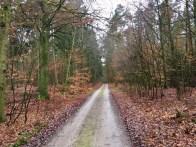 Waldweg nach Buddenhagen