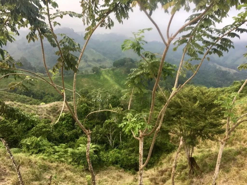 Blick auf die Berge am Wanderpfad