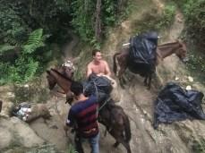 Die Mula-Führer entladen die Tiere am Camp