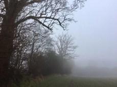 Mystische Schattenrisse am Feldrand