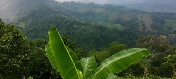 """Trekking in Kolumbien: Wanderung zur """"Verlorenen Stadt"""" – Rückweg (Tag 4 von 4)"""