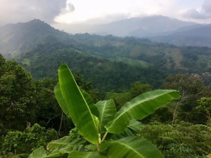 Regenwaldidylle am Trail