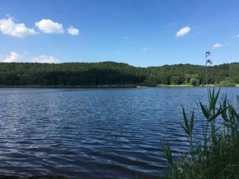 Wunderschönes Elbufer und Bademöglichkeit bei Avendorf