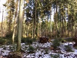 Winterliche Stimmung im Staatsforst Rosengarten