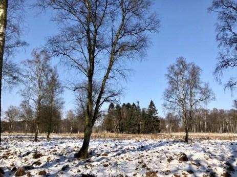 Winterliche Landschaft im Nordosten Hamburgs