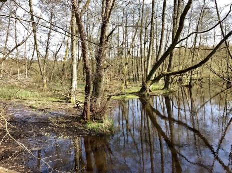 Hellbachaue am Südende des Drüsensees
