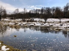 Winterlandschaft im Naturschutzgebiet Höltigbaum