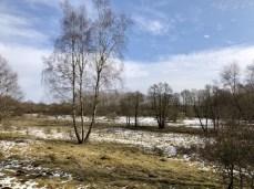 Winterliche Landschaft im Naturschutzgebiet Höltigbaum in Hamburg (2)