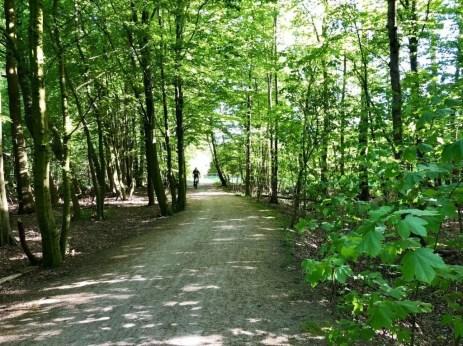 Der schöne Radweg zwischen Krohnstieg und Holtkoppel