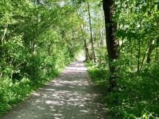 Der schöne Radweg zwischen Krohnstieg und Holzkoppel (2)