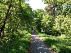 Der Radweg südlich von Zingst