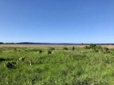 Küstenlandschaft bei Parow in Vorpommern