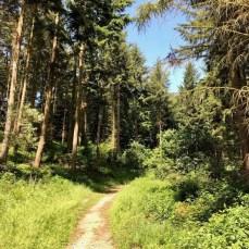 Wanderung auf der Traumschleife Ehrbachklamm in Rheinland-Pfalz