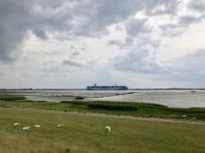 Ein Containerschiff auf der Elbe bei Wedel