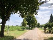 Kastanienallee in Lentschow bei Lassan