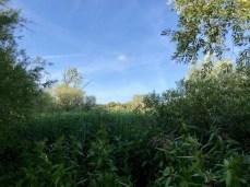 Üppiges Grün im Heuckenlock an der Elbe