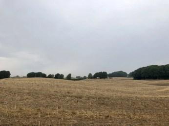 Abgeerntetes Feld am Skåneleden
