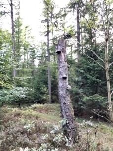 Baumstumpf mit Baumpilzen